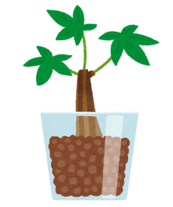 plant_hydroculture