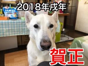 20180113_020132183_iOS